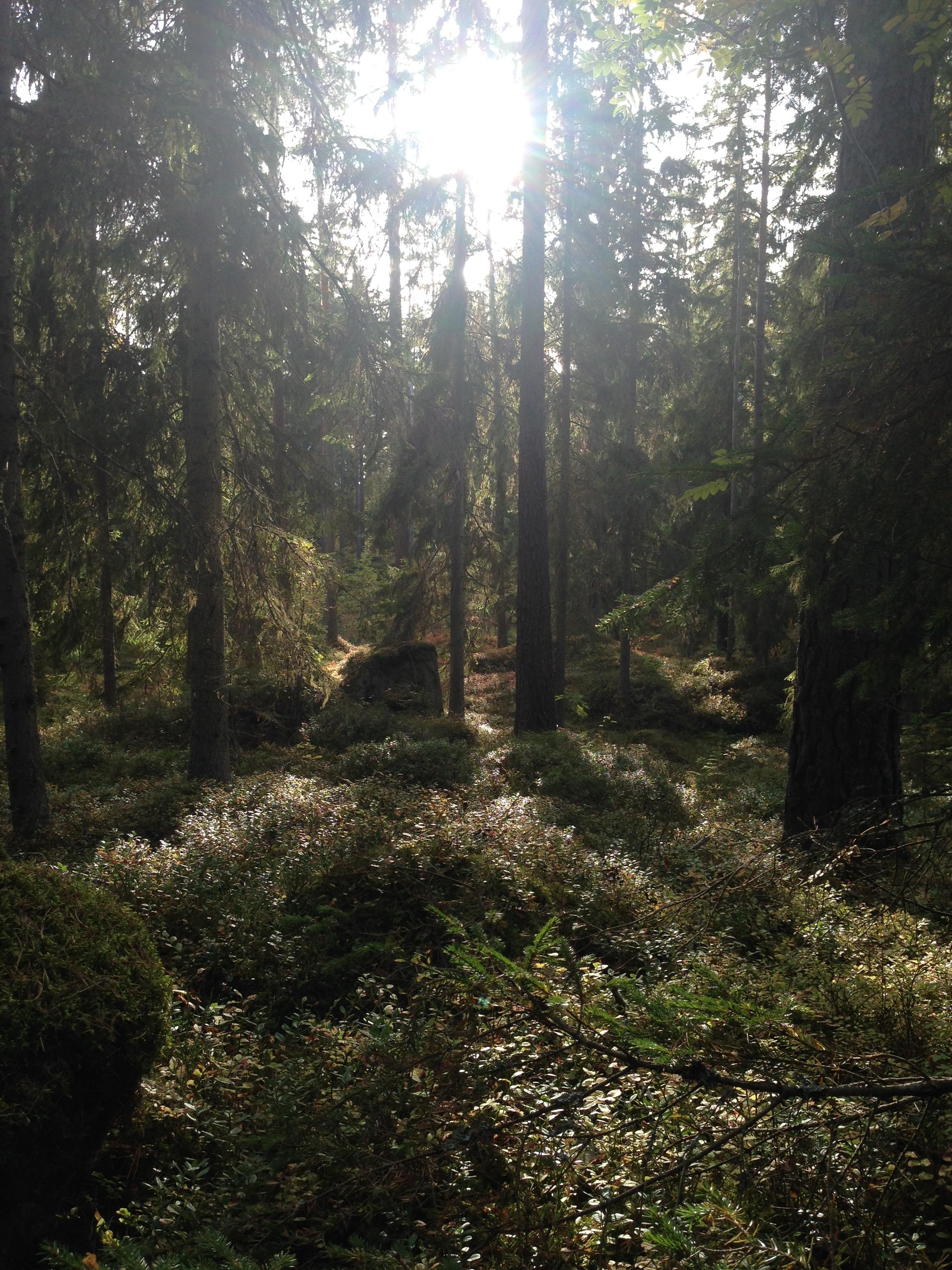Sweden in fall