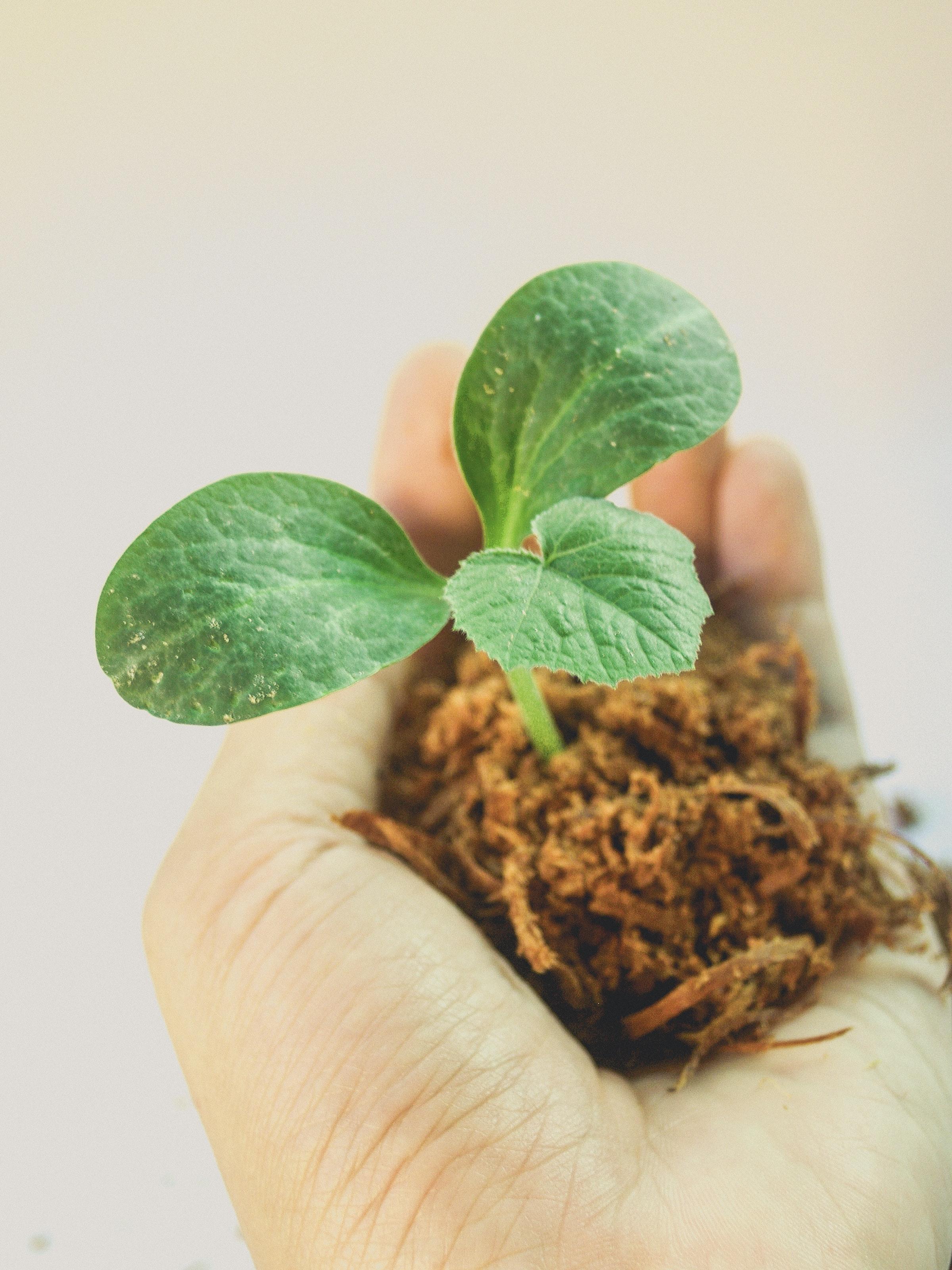 dirt-gardening-grow-1214405.jpg