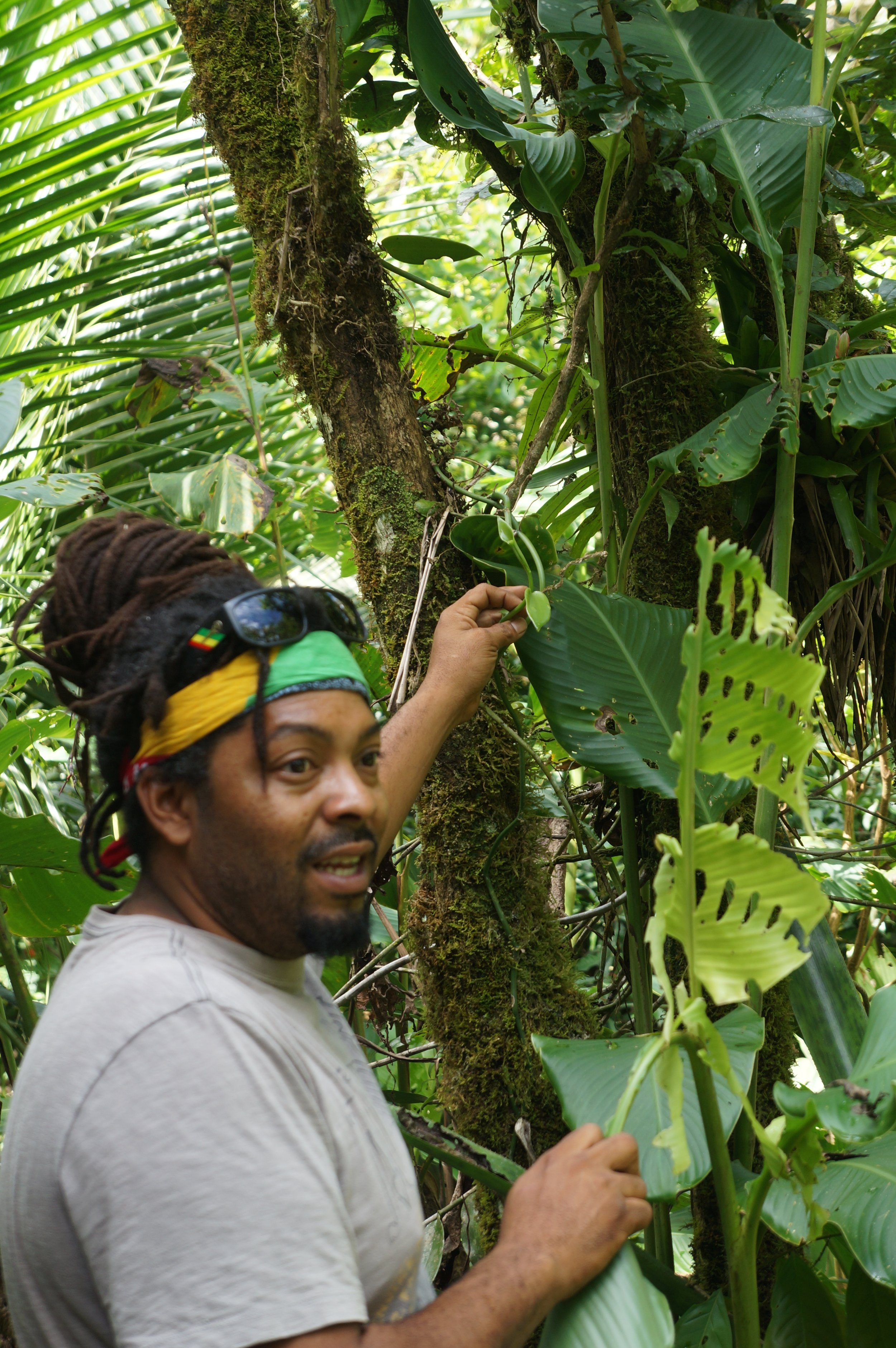 On a medicinal plant tour in the jungles, Cost Rica. Copyright Service By Magie.