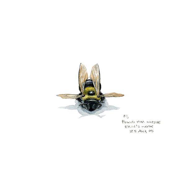 bumble_bee.jpg