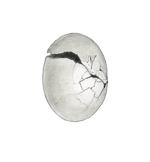 cracked_egg.jpg
