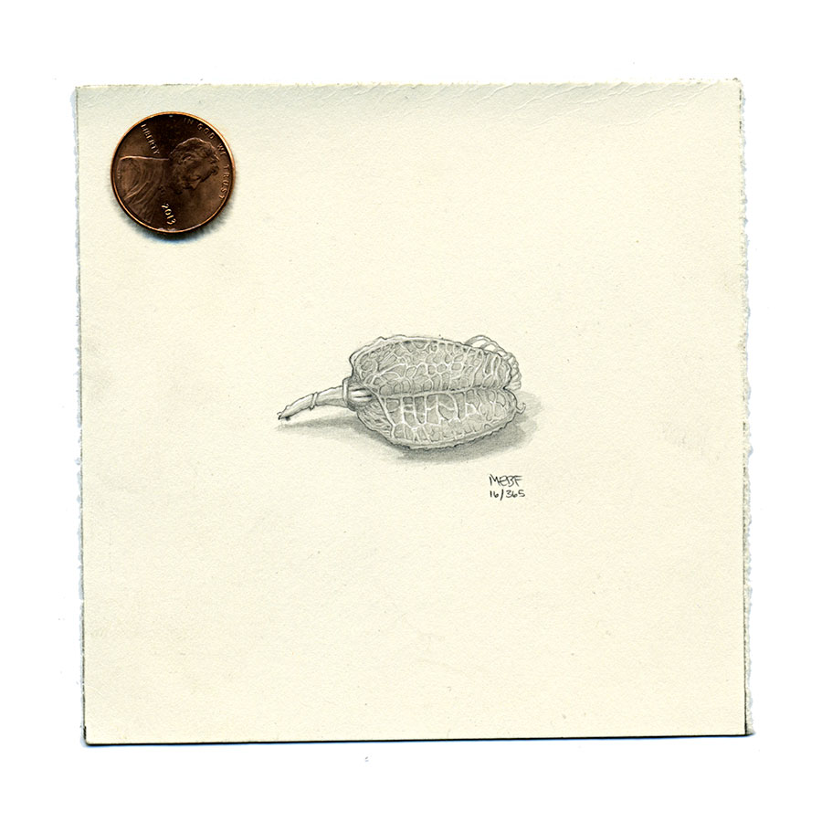 Suggested (and specimen provided by) Heath Johnston | Pencil