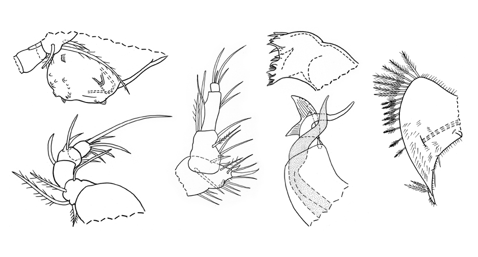 crustaceans2.jpg