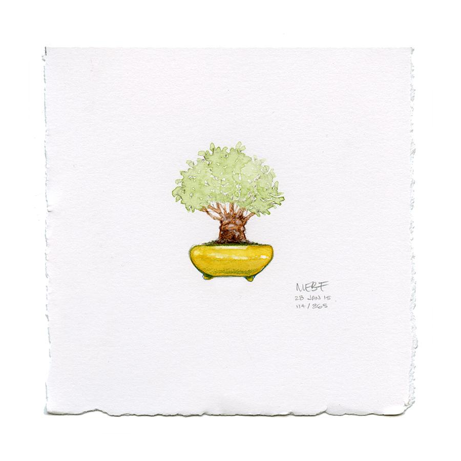 draw114_bonsai.jpg