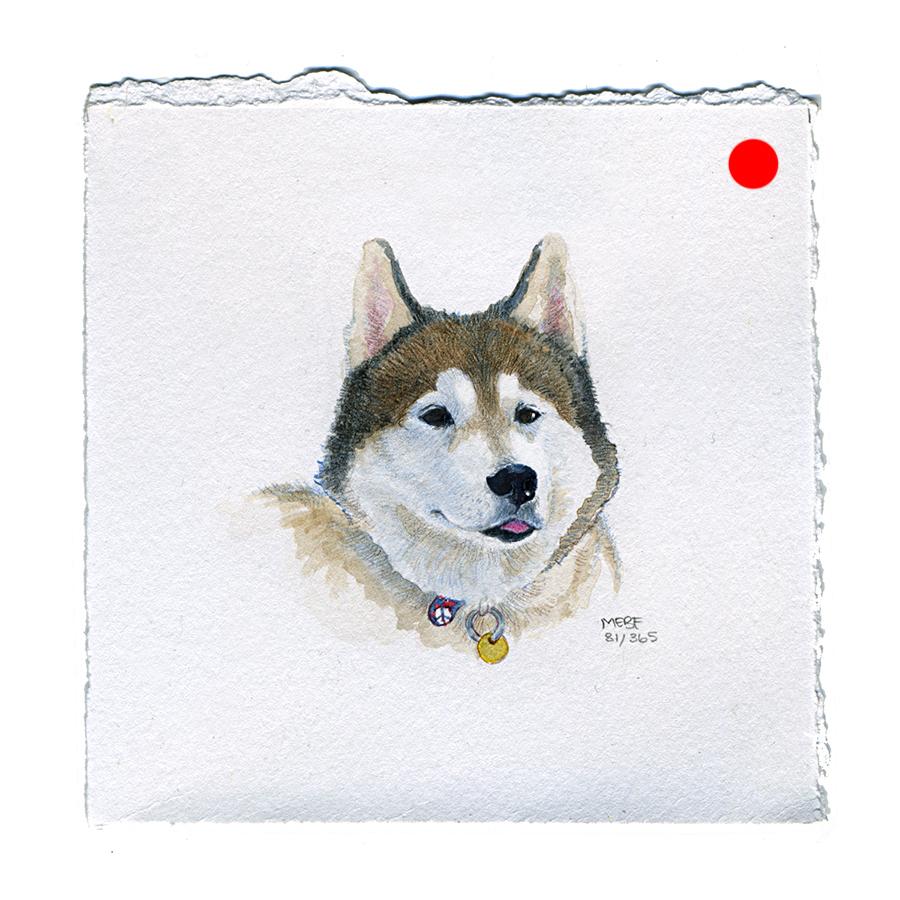 draw81_husky(SOLD).jpg