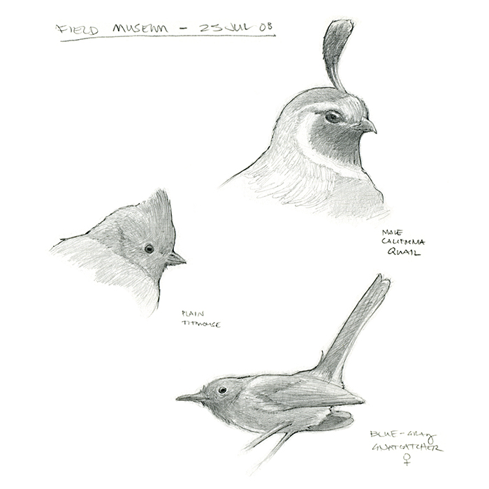 field_museum_bird_sketches.jpg