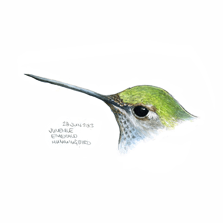 28_hummingbird.jpg