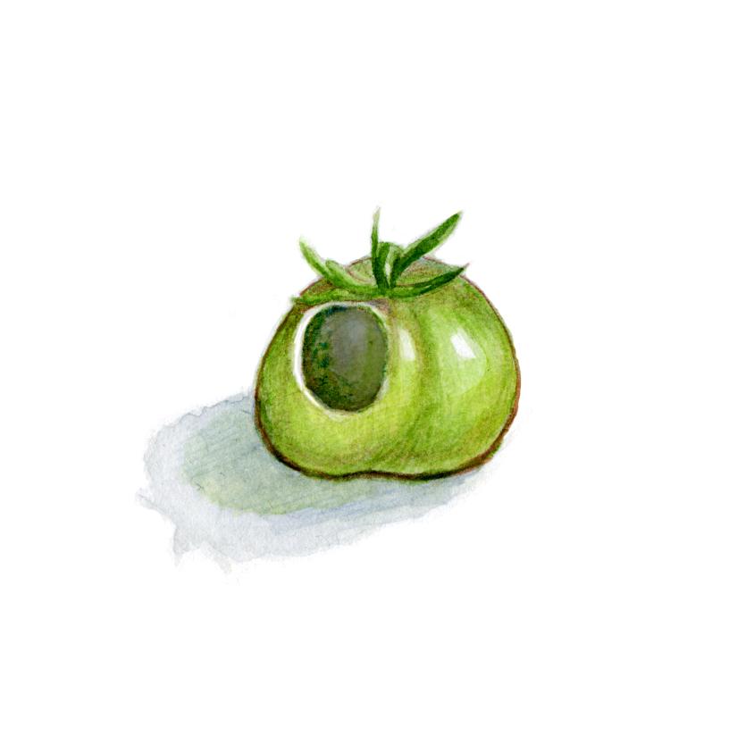 holey_tomato.jpg