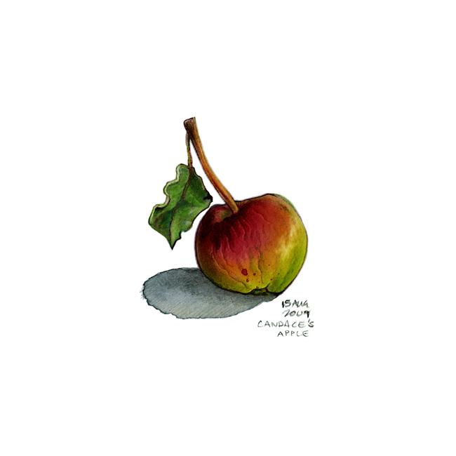 candaces_tiny_apple.jpg