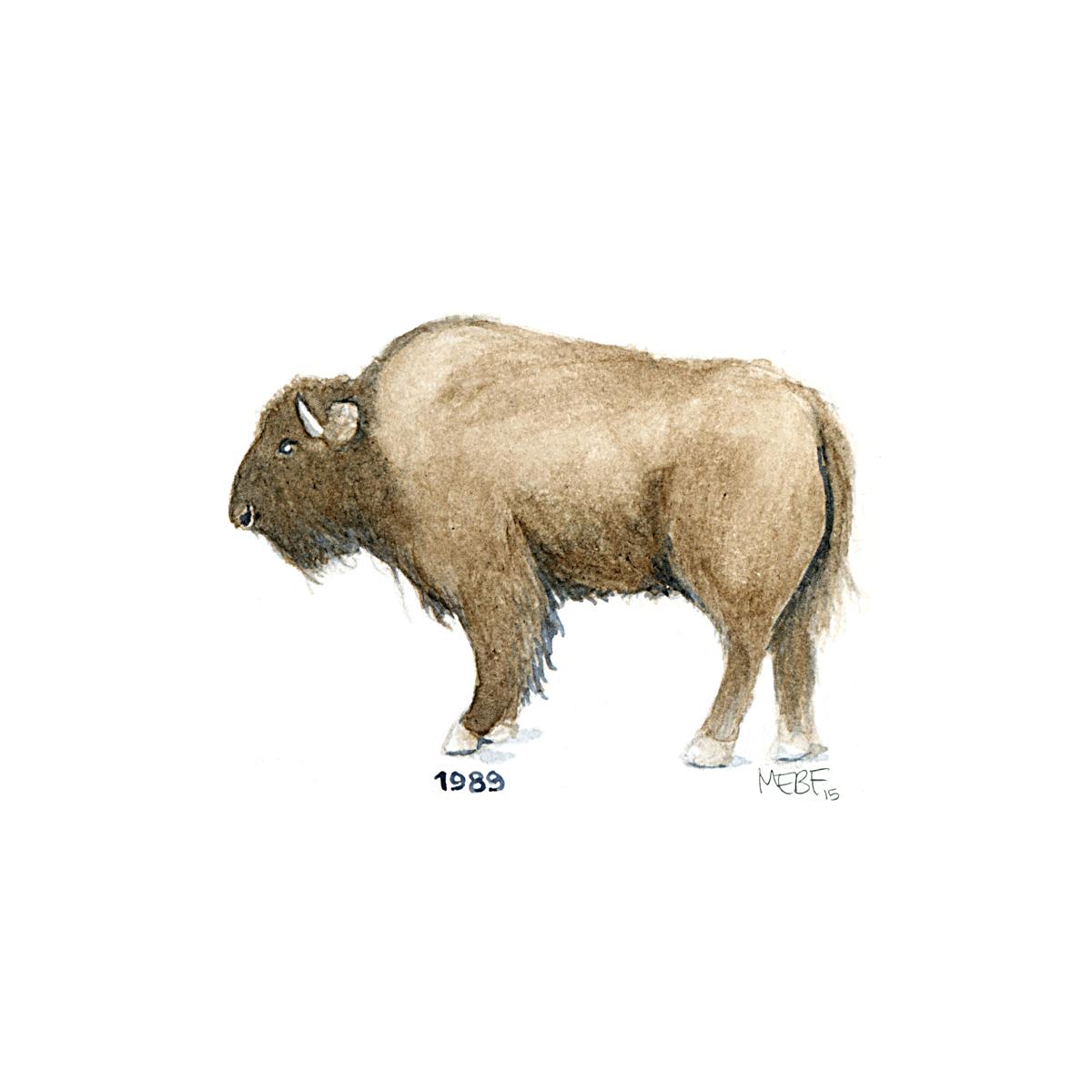 buffalo89.jpg
