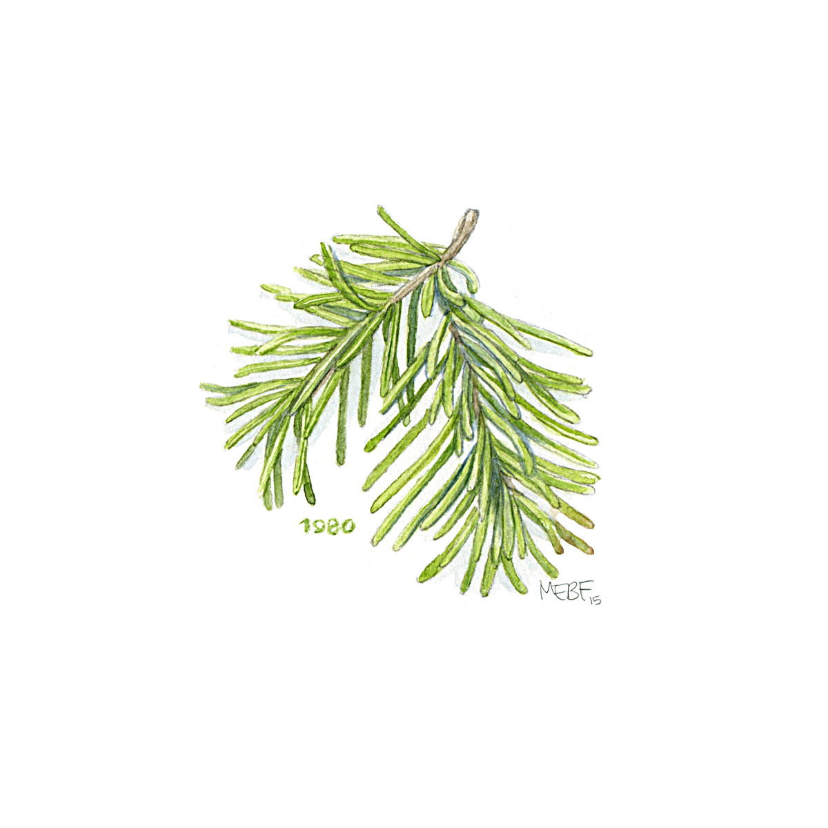 pinebranch80.jpg