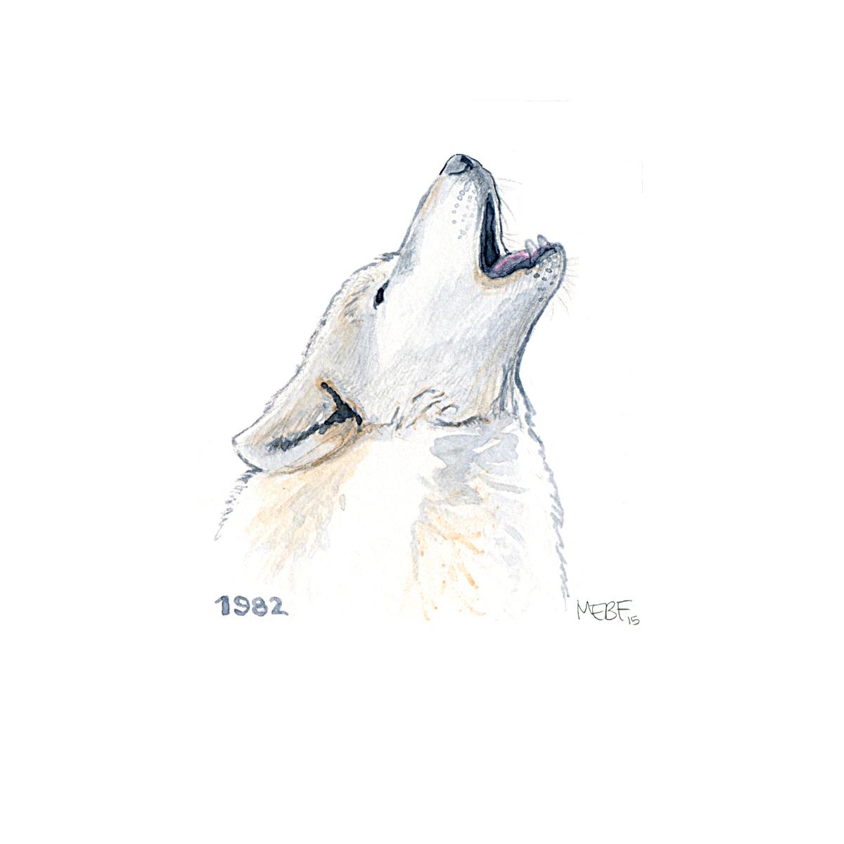 wolf82.jpg
