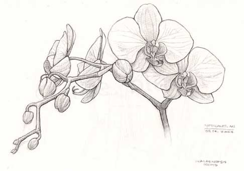 andys_orchid.jpg