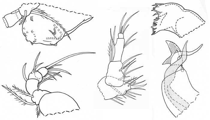 crustaceans.jpg
