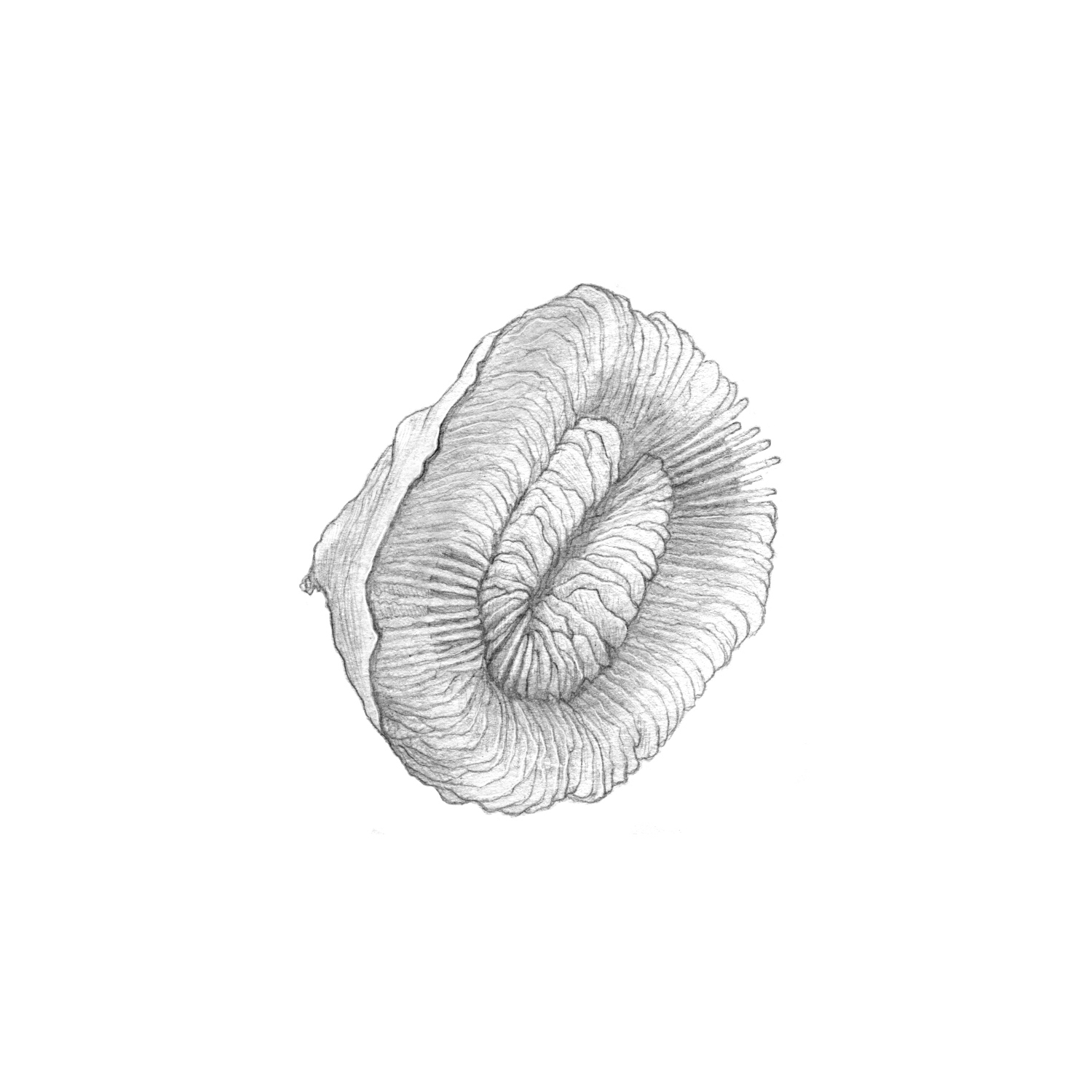 plate_coral(closed).jpg