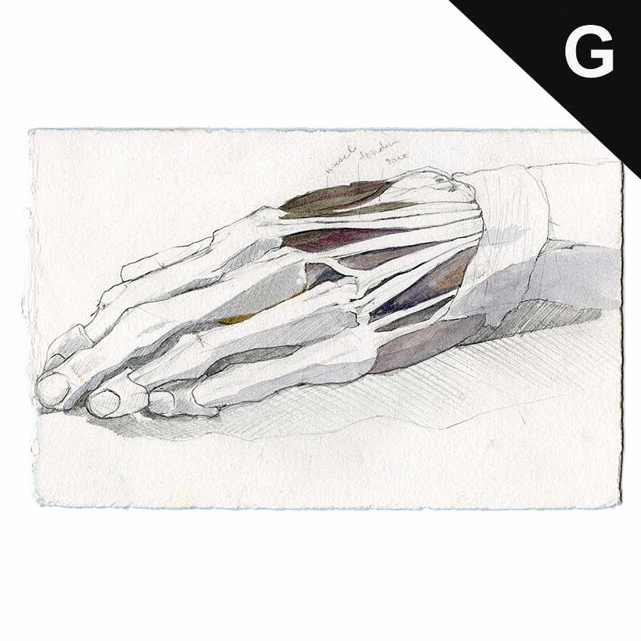 cadaver_hand002.jpg