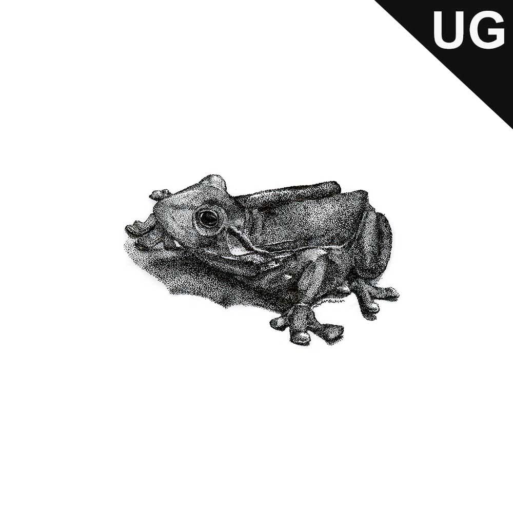 frog(dot_UG)001.jpg