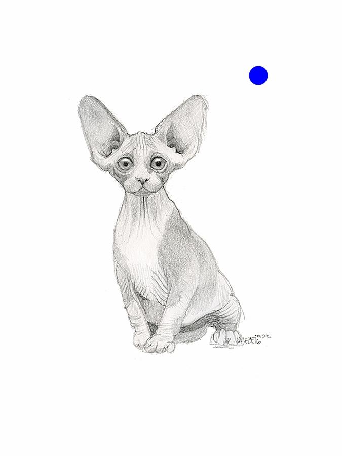 wrinkle_kitty.jpg