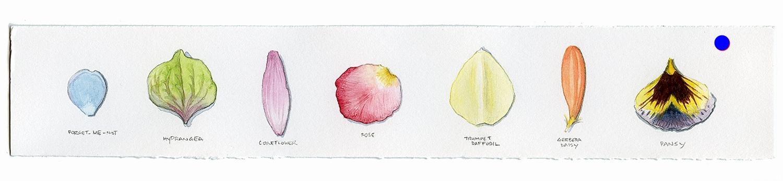 flowers001.jpg