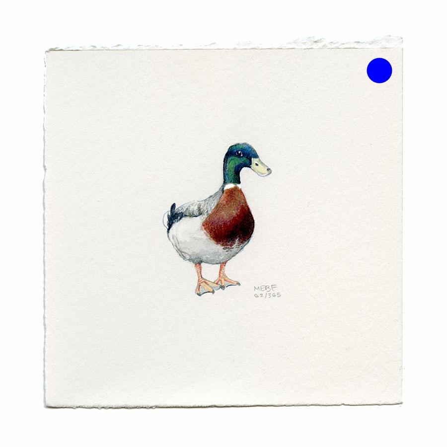 draw62_mallard.jpg