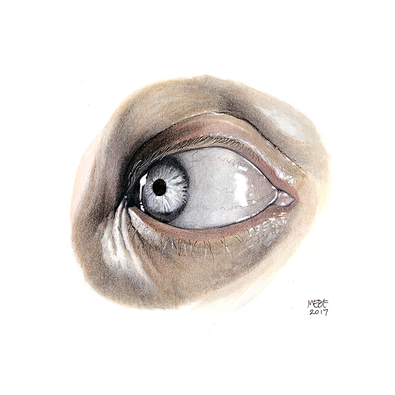 watercarbon_eye002.jpg