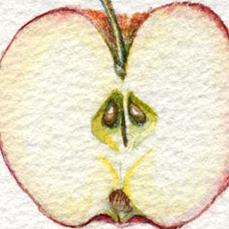 FRUITS+VEGGIES -