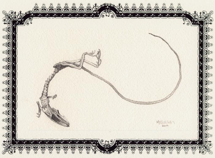 dead_lizard.jpg