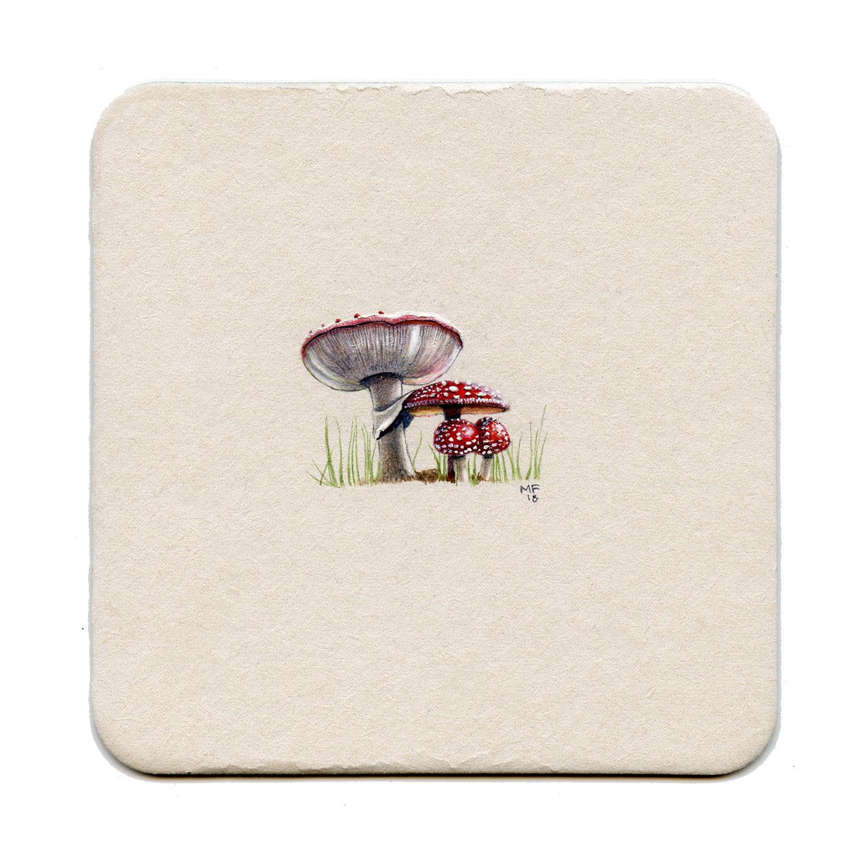 365_32(amanita_mushroom)big.jpg