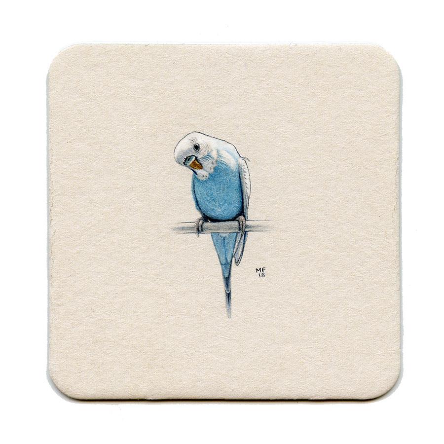 Budgie (Parakeet)
