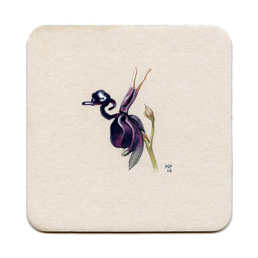 365_122(duck_orchid)001.jpg