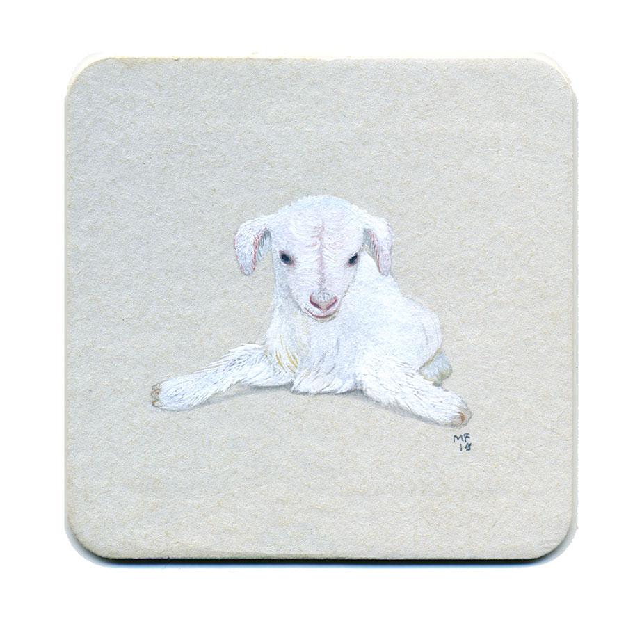 365_333(goat_baby).jpg