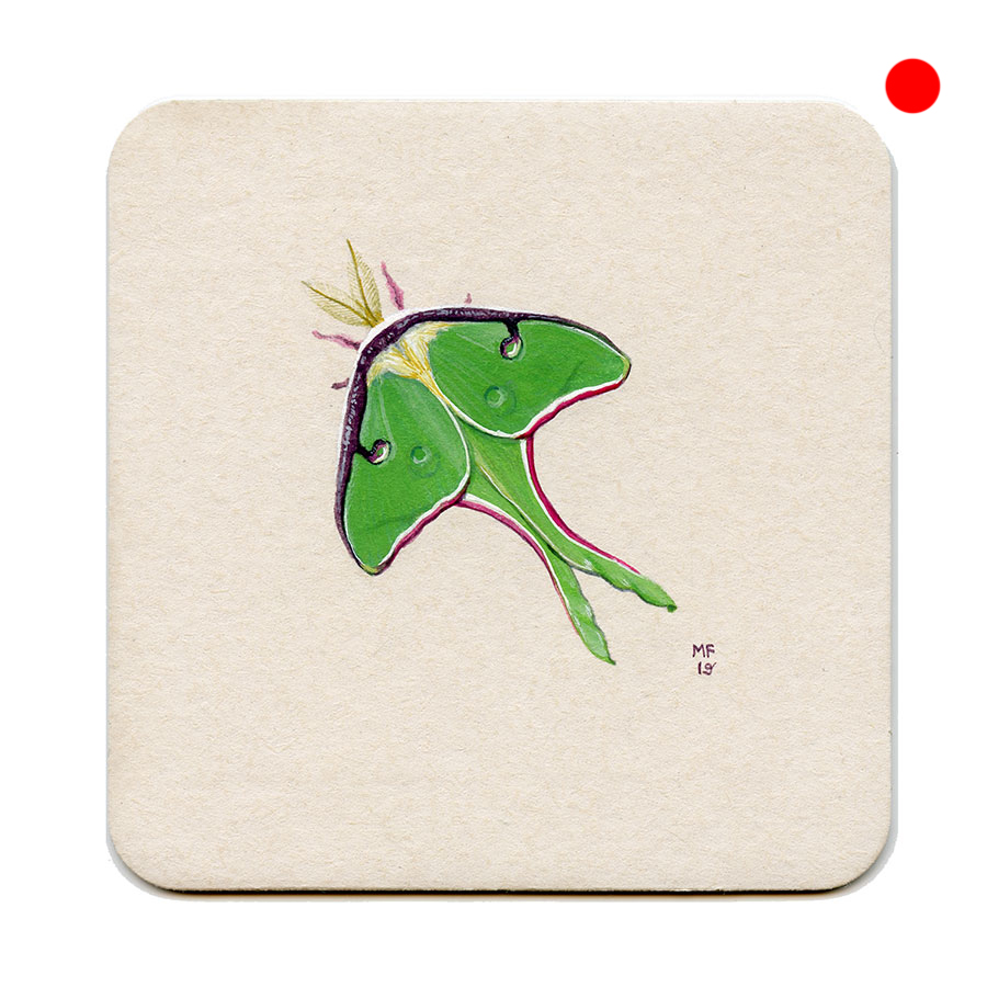 365_340(luna_moth)001.jpg
