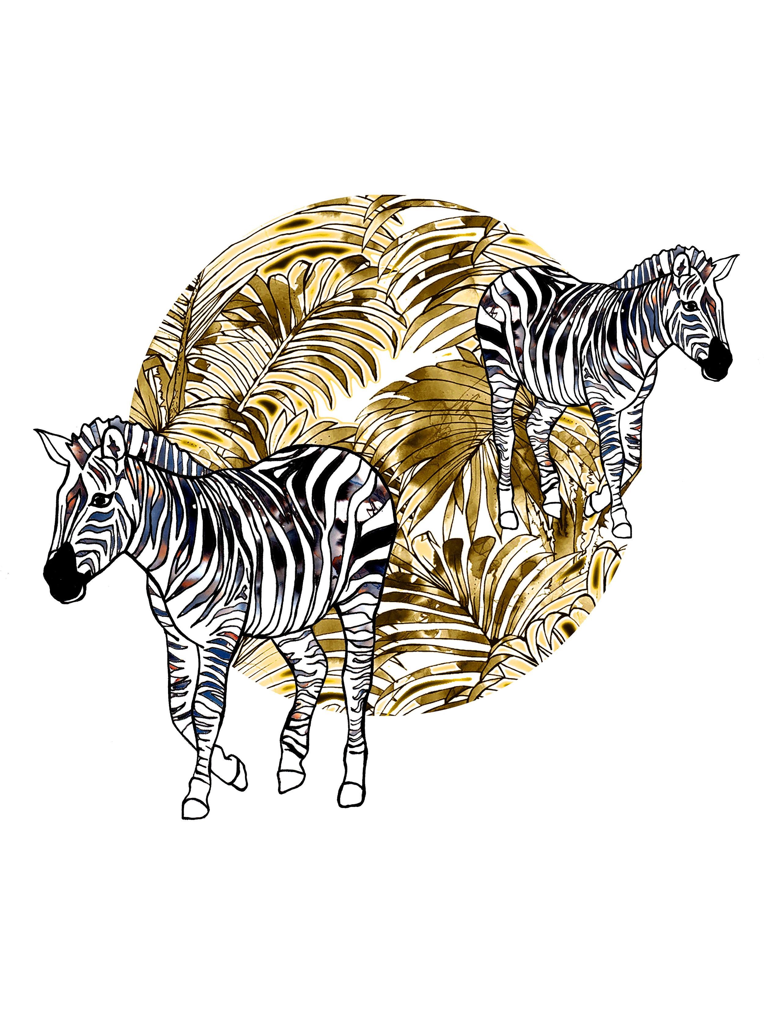 safari zebras.jpg