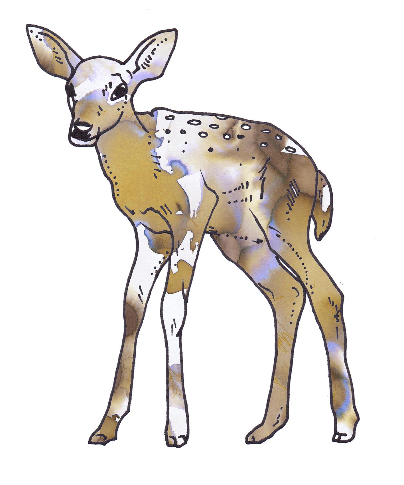 baby deer-Recovered.jpg