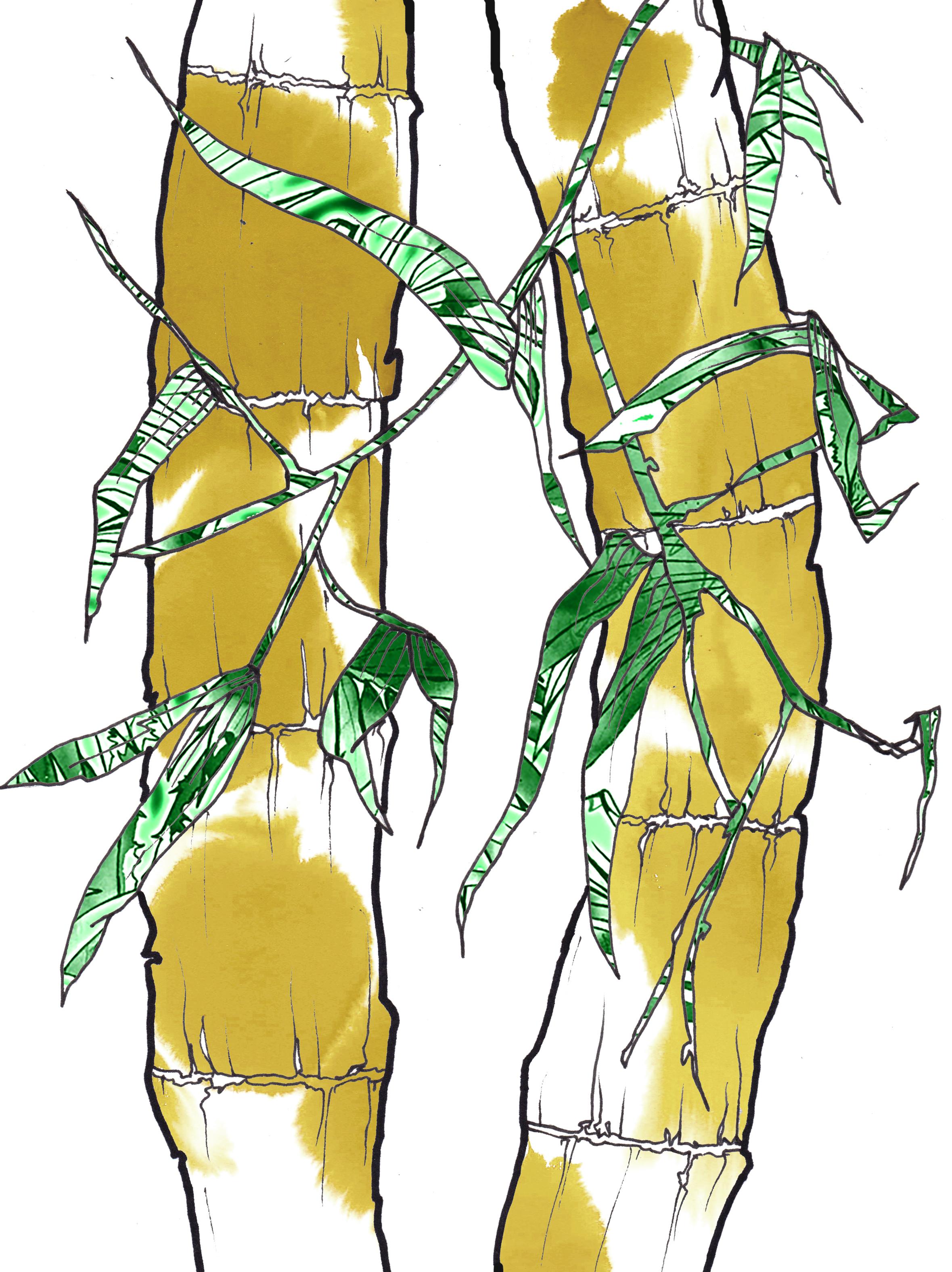 bamboo colour.jpg