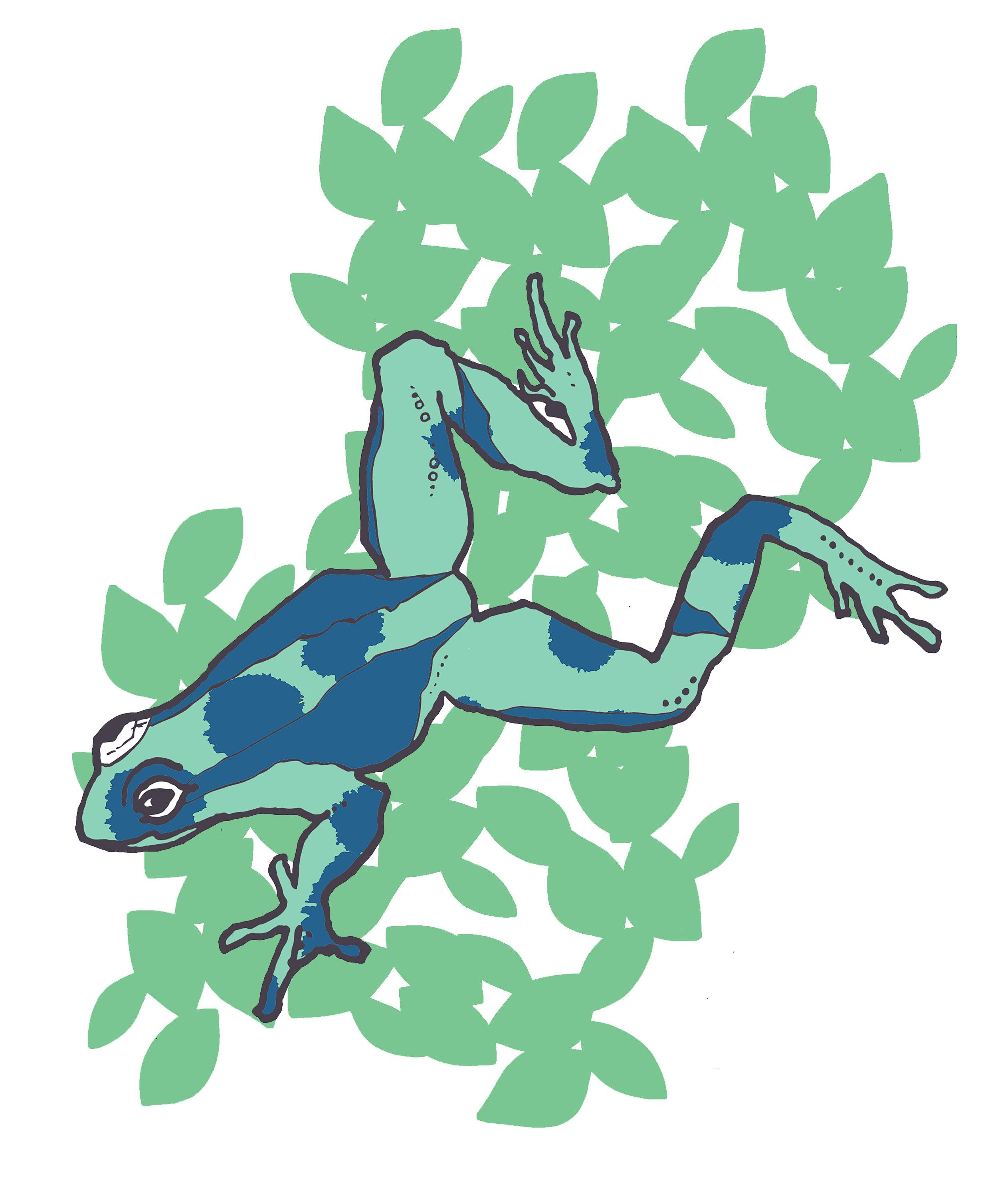 frog leaf.jpg