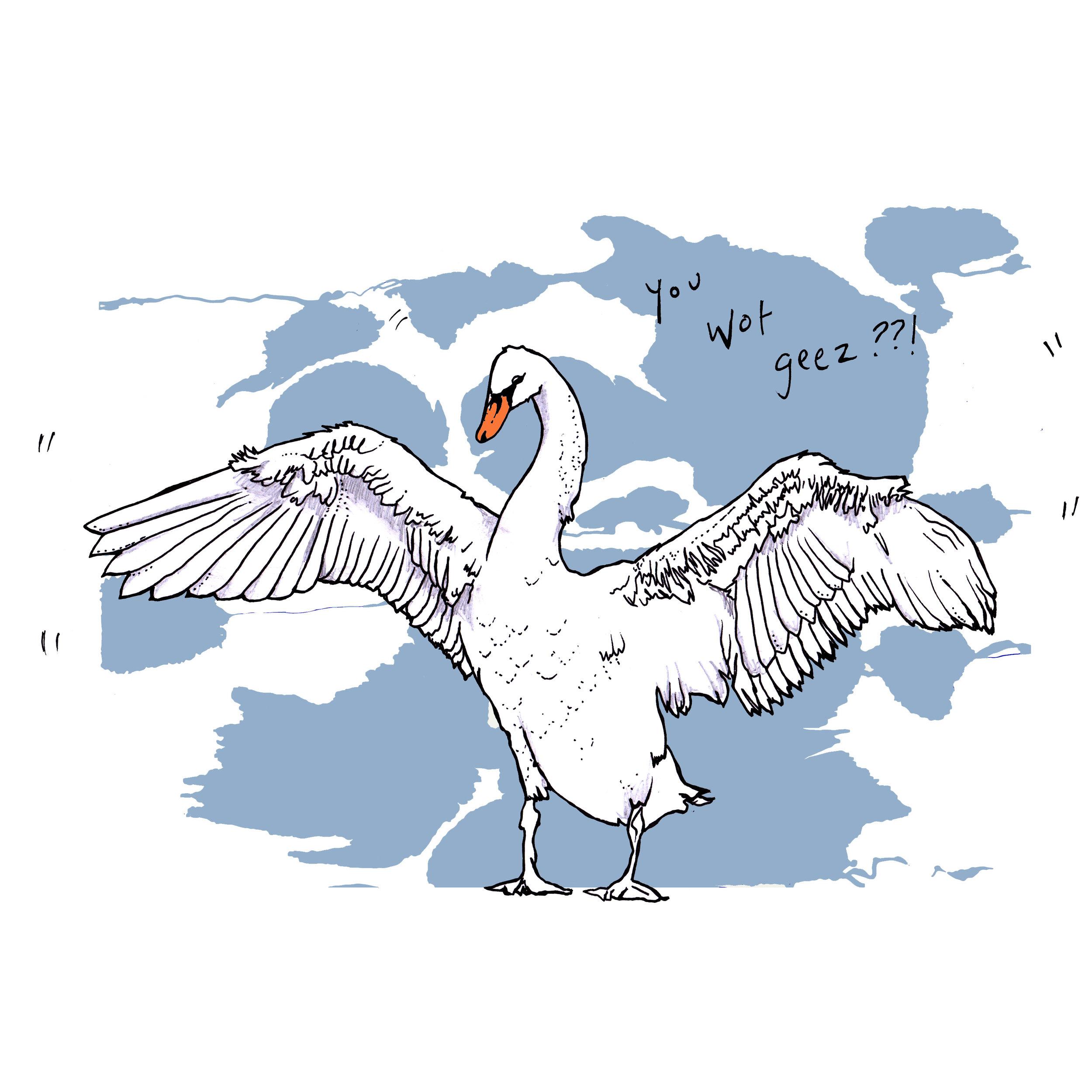 aggy swan.jpg