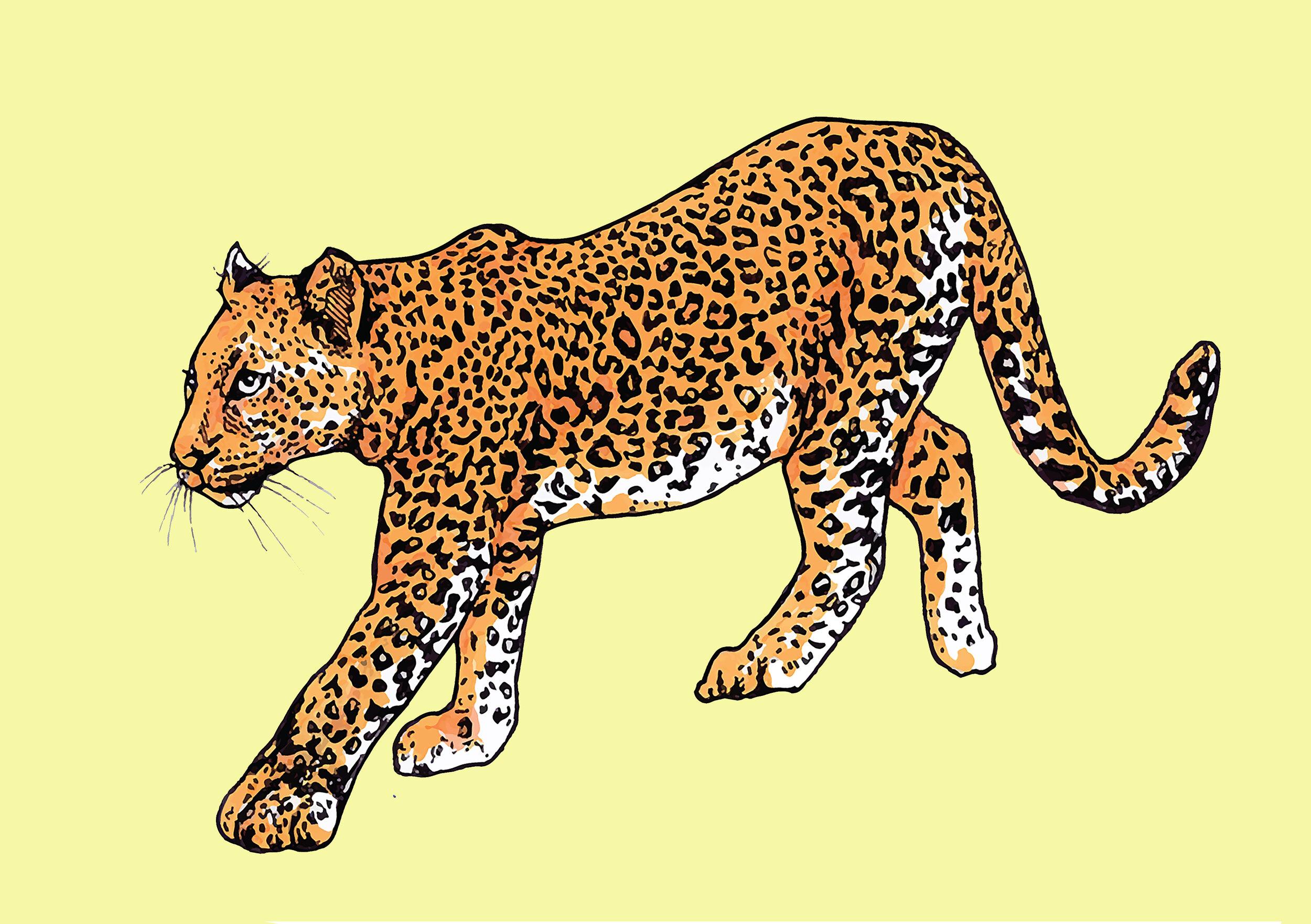 leopard card.jpg