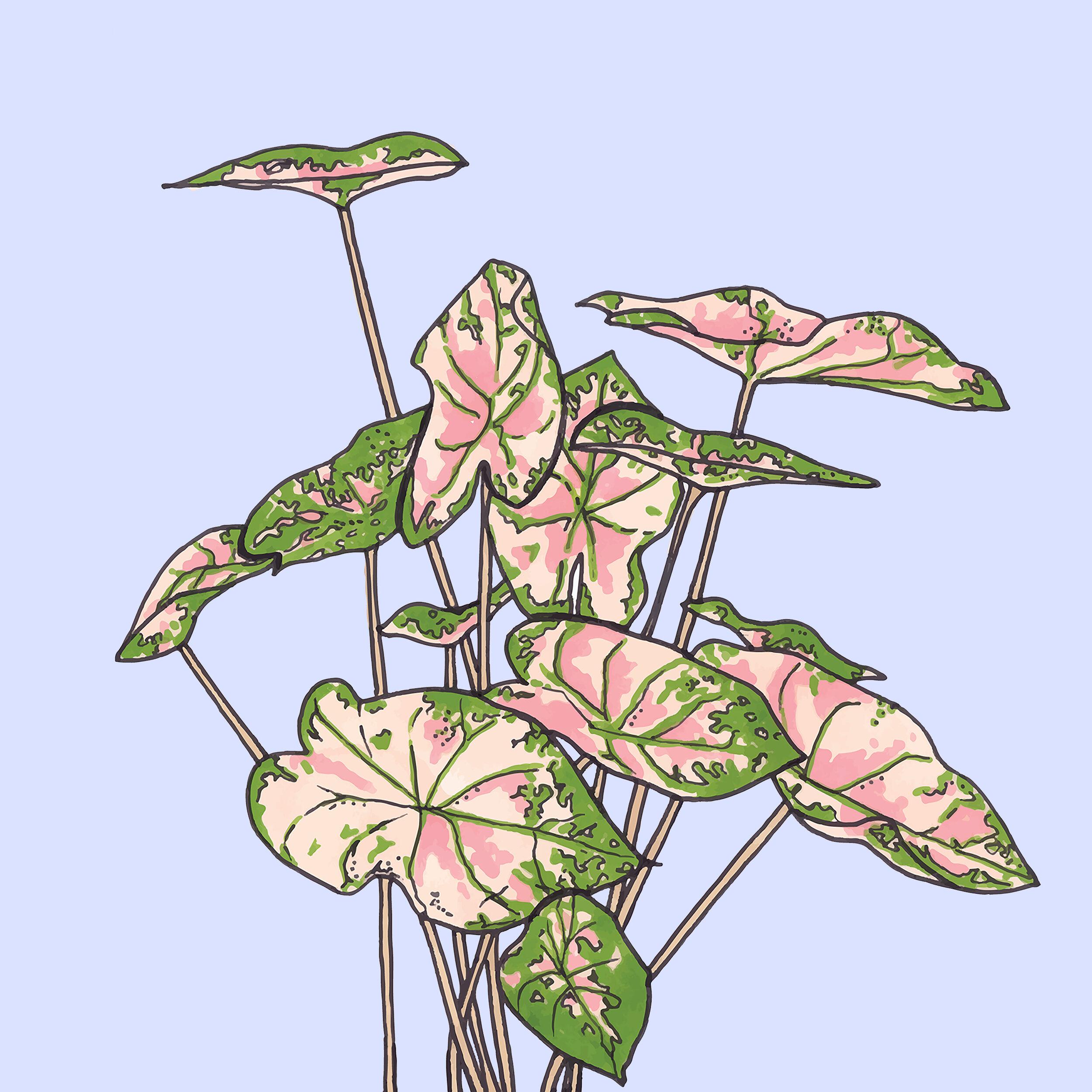 PINK PLANTS.jpg
