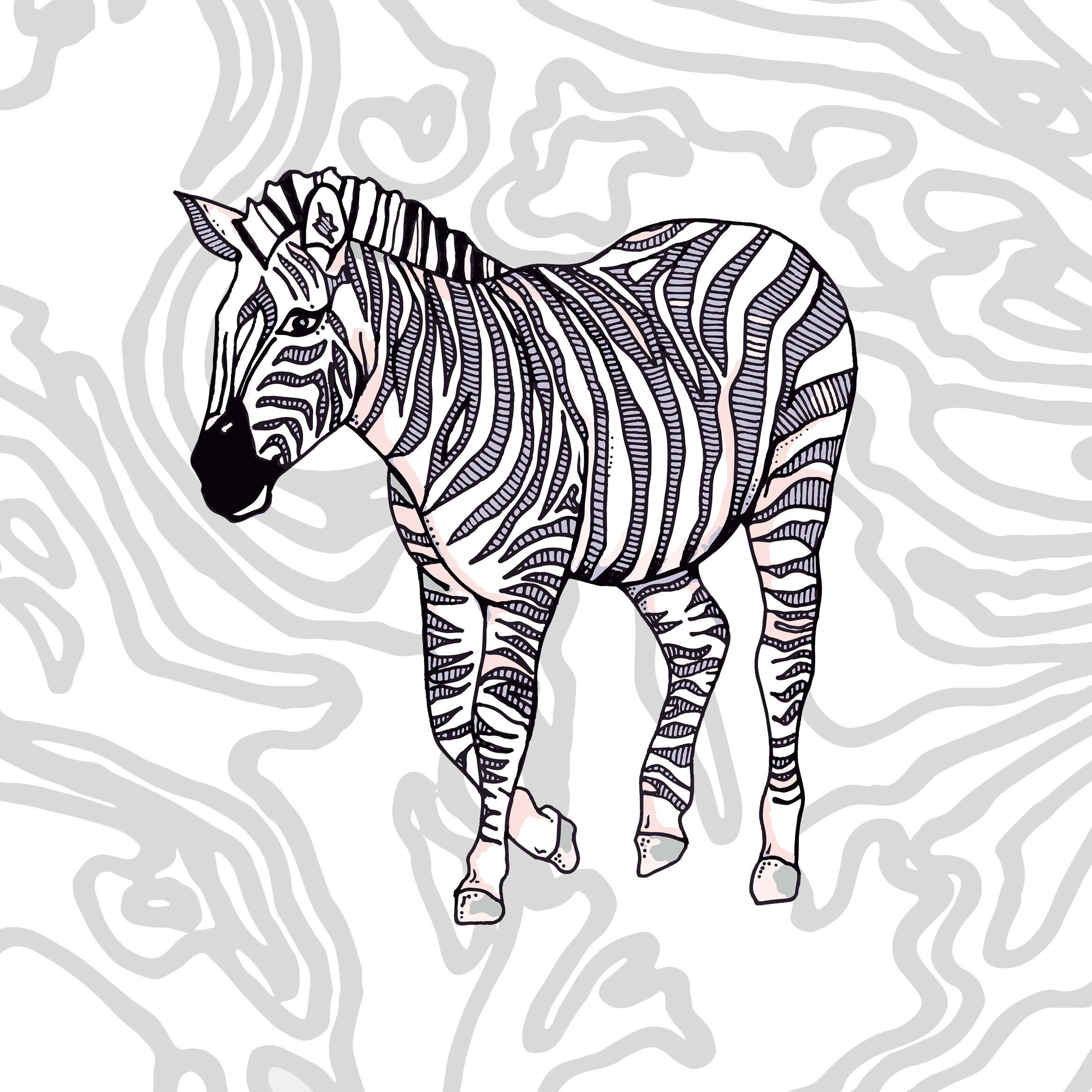 grey zebra.jpg