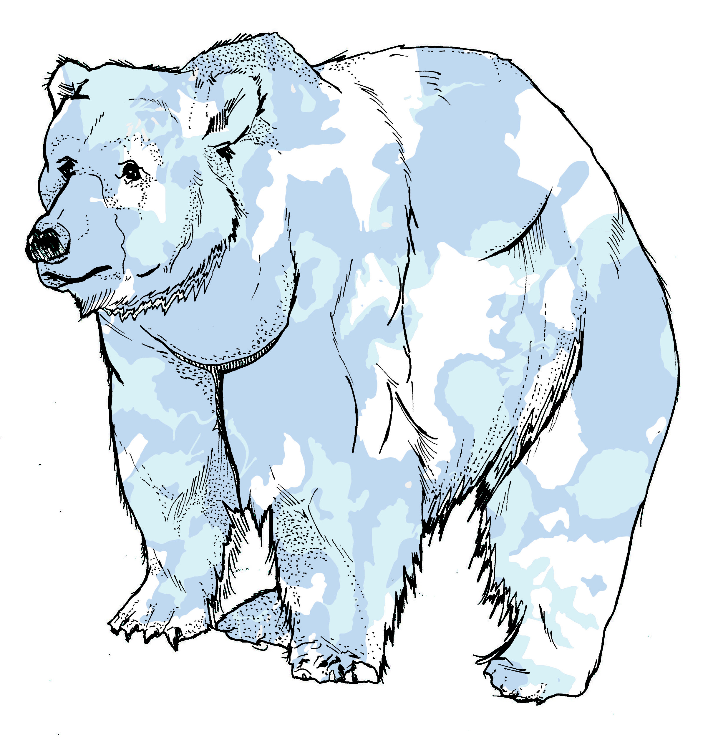 camo bear.jpg