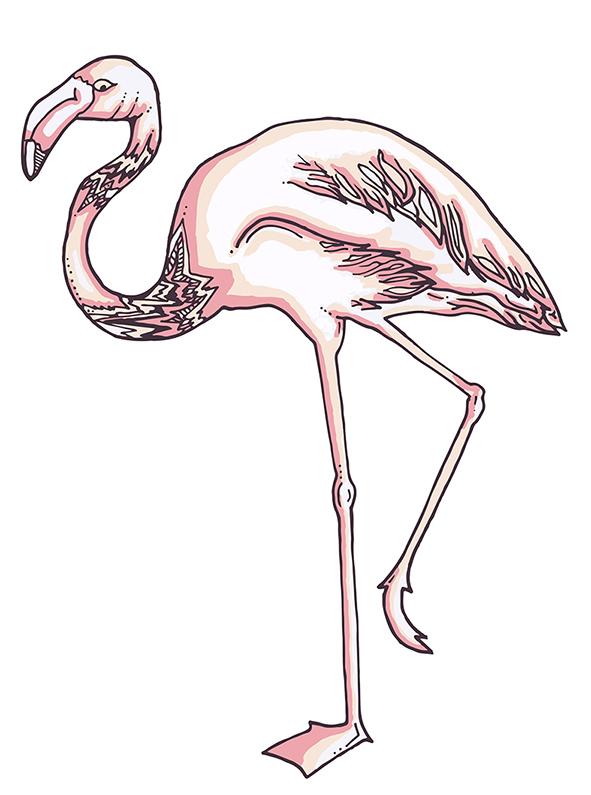 A6 flamingo sized.jpg