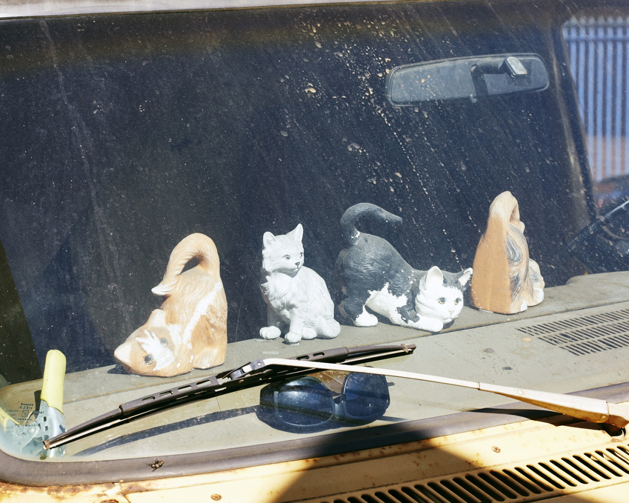 Cats on the dash.
