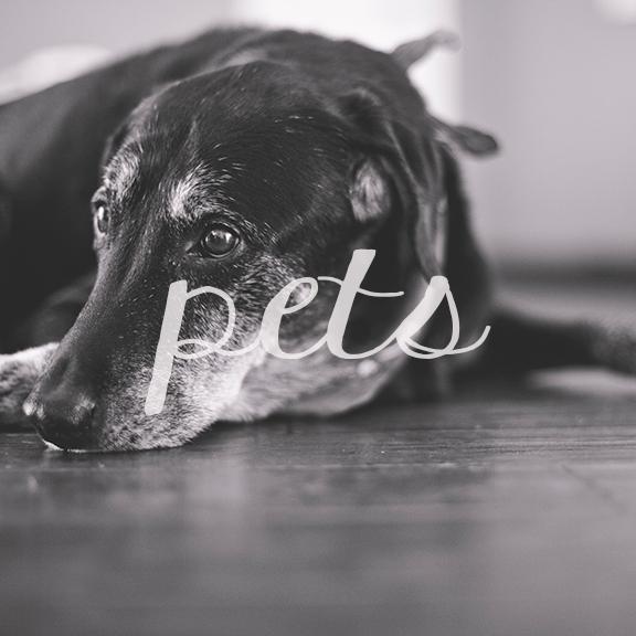 pets-block-2.jpg