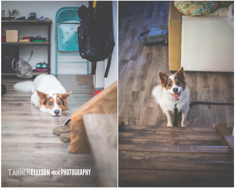 DogCollage150.jpg