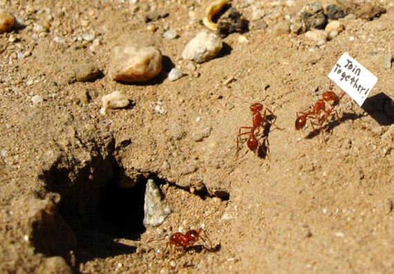 daino-ants-we-come-in-peace-designboom-07.jpg