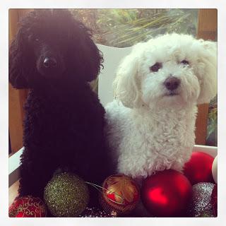 Christmas+doggies.JPG