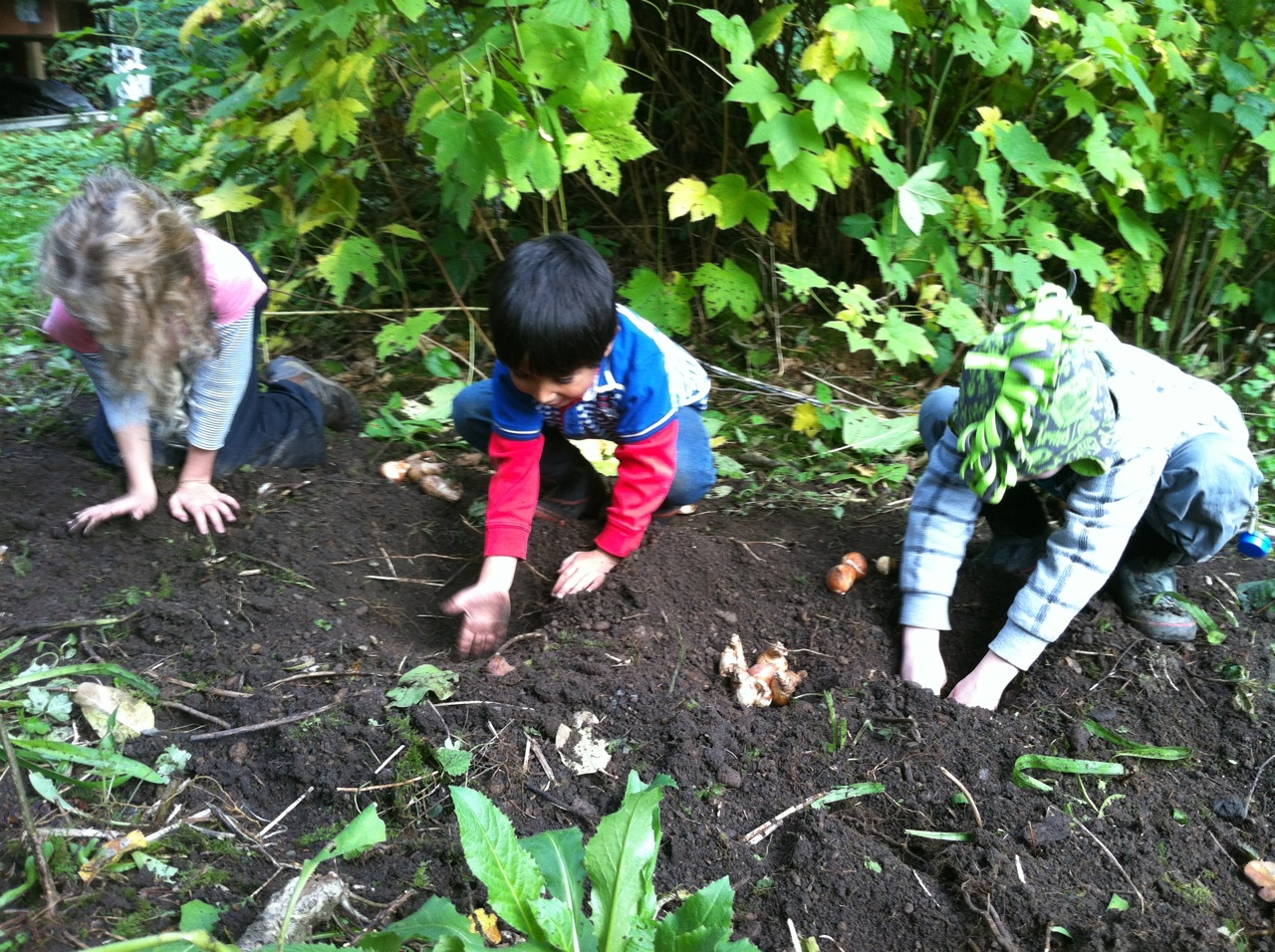 planting bulbs under the apple tree
