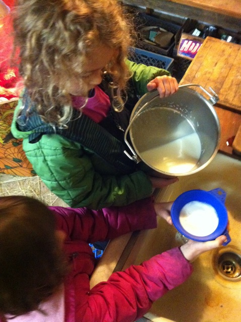 filtering goat milk
