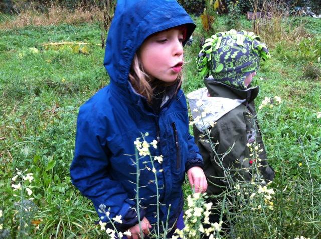 browsing broccoli buds